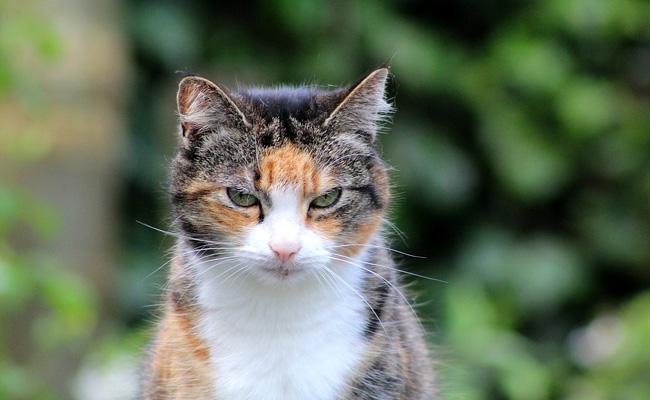Animaux domestiques et sauvages en danger